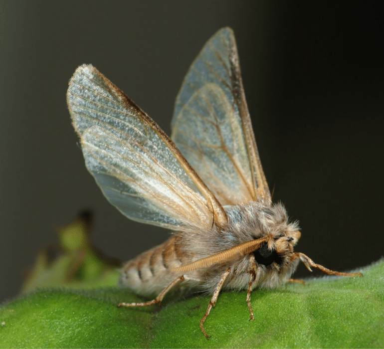 Moth looking for a healthy lawn