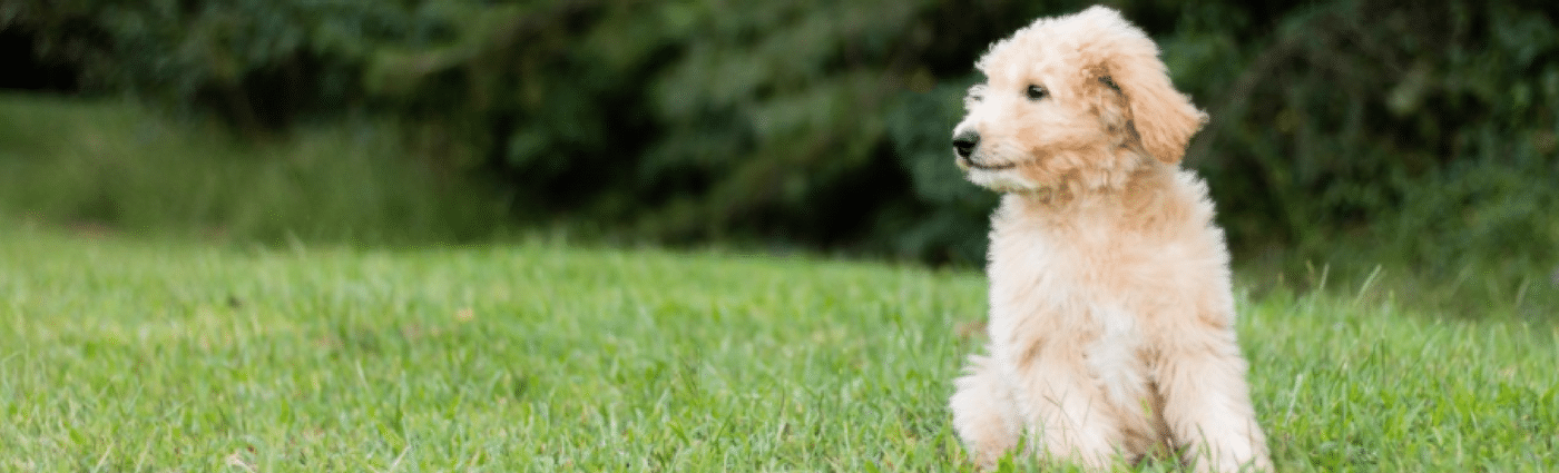 pets and lawn care